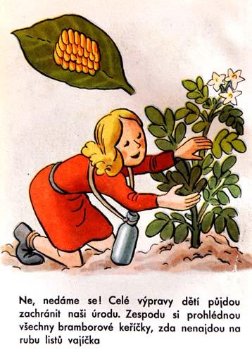Z knihy: O zlém brouku bramborouku. O mandelince americké, která chce loupit z našich talířů (1950)