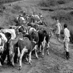 "Fotografie z filmu ""Zelené obzory"" (ČR 1962, režie: Ivo Novák)"