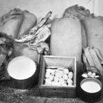 Rok 1955: Zatajené zásoby nalezené u hospodáře Jana Halady Droužetic na Strakonicku (Foto zdroj: Národní zemědělské muzeum)