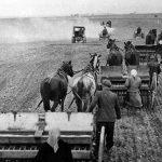1950: Společný osev členů JZD Mělnické Vtelno na okrese Mělník (Foto zdroj: Národní zemědělské muzeum)