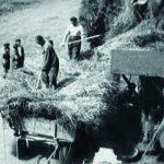 Řeholníci byli zaměstnáni v prostorách kláštera, na státním statku, při polních pracích, v lese, v živočišné výrobě, na stavbách, v kamenolomu, při vykládce vagónů atd. Zdroj: Archiv bezpečnostních složek